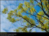 DSC5969 PS web.jpg