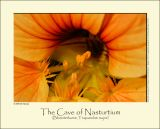 The Cave of Nasturtium