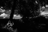 20080802 - Trees