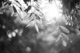 20080804 - Light