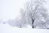 20081204 - Snowy