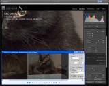Color Noise: Adobe LR/ACR vs QImage