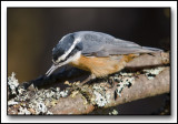 The Nuthatch Gallery