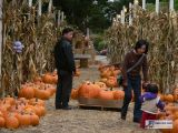 Buffalo and Pumpkins - Fun with Jane - 10/15/06