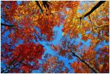 fallMountsberg4.jpg