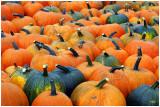 downeyPumpkins1.jpg