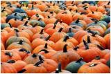 downeyPumpkins2.jpg