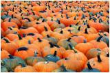 downeyPumpkins3.jpg