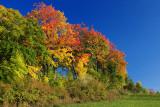 Autumn 2008 (7)