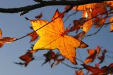 ex yellow leaves branches mod .jpg
