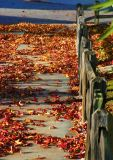 ex  leaves on sidewalk by wooden fence mod.jpg