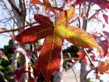ex fall leaf mod.jpg
