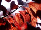 ex glowing leaves mod.jpg
