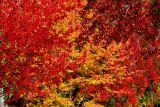 ex mass of fall leaves mod.jpg