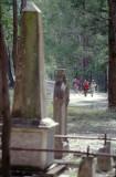 Old graves at Joadja - 1