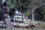 Memento More, Yerranderie