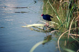 Bird life, Bicentennial Patk