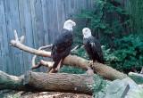 Aviary July 2008