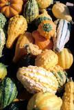 02_harvest2.JPG