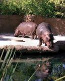 zeiss05_hippos.JPG