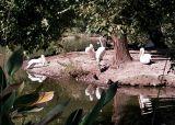 pelicanisland.jpg