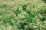 17_hillside.JPG