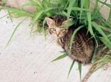 06_stray_kitty.JPG