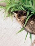 07_stray-kitty.JPG