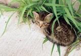08_stray_kitty.JPG