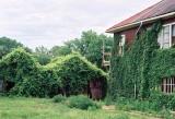 27_overgrowth.JPG