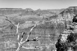 Tree Projection Monochrome