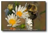 A bit of Honey : Cherry Valley, IL : Swanson Park