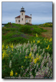 Yet More Lighthouses : Bandon OR