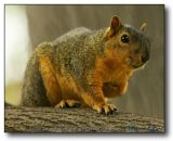 Squirrel : You talking to me?