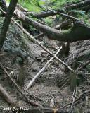 Sunken mine shaft, 1/2 mile north of Green River Horse Camp