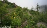 #1 Divide Trail