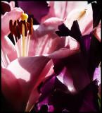 pink and purple.jpg
