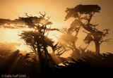 Magic Light and Monterey Cypresses, Pebble Beach