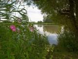 Ballerup nature