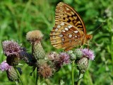 Life in a WV Canadian Thistle Patch ~ A PBlog Journal ~ 2008