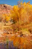 Fall Color near Comb Ridge 1
