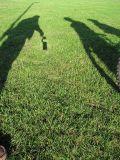 Shadow of BEAK rig