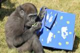 Gorillas - LA Zoo