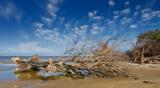 Serpentine River driftwood