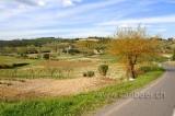 Montaione FI (91595)