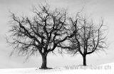 Baeume im Winter (9925)