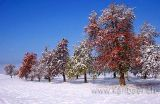 Der erste Schnee (8947)