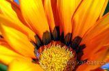 Blume / Flower (5119)