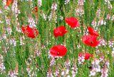 Blumenwiese (02171)