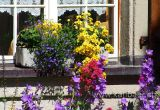 Blumenfenster (01934)